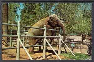 Nosey the Elephant,Roeding Park Zoo,Fresno,CA