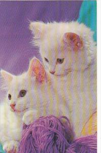 Pair Of Kittens Playing With Yarn