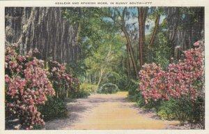 FLORIDA, 30-40s; Azaleas and Spanish Moss, In Sunny South