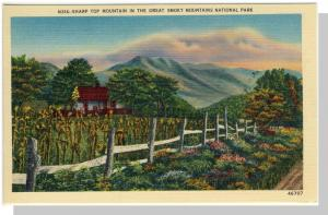 Smoky Mountains Nat'l Park,Postcard,NC/TN,Sharp Top,Nr Mint