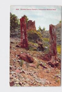 ANTIQUE POSTCARD NATIONAL STATE PARK YELLOWSTONE PETRIFIED TREES AT YANCEY'S #1