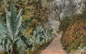 OAKLAND, California, 1900-10s; Nana Palms in Canyon, Piedmont Park