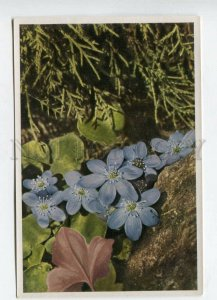 428072 Flower Anemone Hepatica Vintage Sammelwerk Tobacco Card w/ ADVERTISING