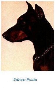 Dog ,   Doberman Pinscher