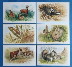 Set of 6 Mammals Postcards by Geoff White, Deer Badger Mouse Rabbit Fox Squirrel