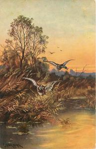 Artist Signed~Mallards Up In Flight From Lake~Sunset~TSN~Serie 488 No 7~Germany