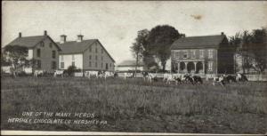 Hershey PA Hershey Park Farm/Cows c1910 Chocolate Candy Bar Insert Postcard