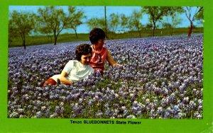 TX - Texas Bluebonnets  (State Flower)