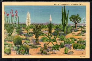 A Few Varieties of Desert Cacti