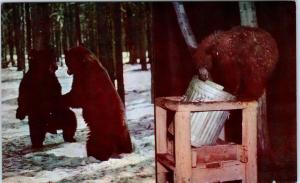 YELLOWSTONE NATIONAL PARK, WY  GARBAGE Can SCROUNGING BEAR  c1950s   Postcard