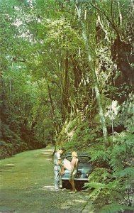Jamaica, Jamaique Post card Old Vintage Antique Postcard Fern Gully Ocho Rios...