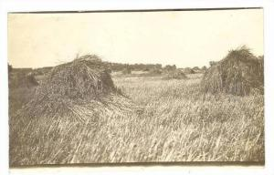 RP: Wheat or hay Field,Olarion,IA / Iowa 1900-10s PU