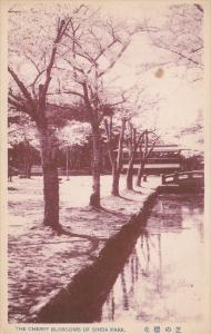 The Cherry Blossoms Of Shiba Park, JAPAN, 1900-1910s