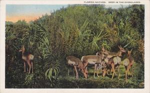 Florida Native Deer In The Everglades Curteich