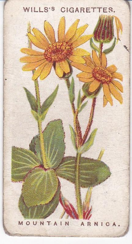 Cigarette Cards Wills Alpine Flowers No 30 Mountain Arnica