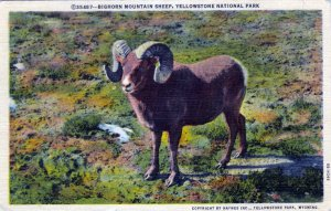 [ Linen ] US Wyoming Yellowstone - Bighorn Mountain Sheep