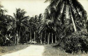 british North Borneo, JESSELTON, Native Houses between Palm Trees (1933) RPPC