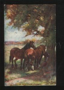 060607 HORSES in Shade by HARRY PAYNE old TUCK 3311