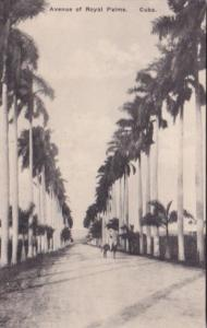 Cuba Havana Avenue Of Royal Palms