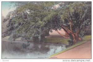 SINGAPORE , 00-10s : Botanical Garden #3