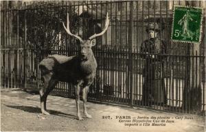 CPA PARIS (5e) Jardin des Plantes - Cerf Rusa de Java (133624)