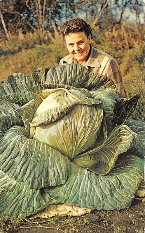 Palmer Alaska~Lady with 44lb Alaska Cabbage~Matanuska Valley~1950s Postcard