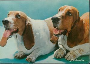 Dog dogs animal topic