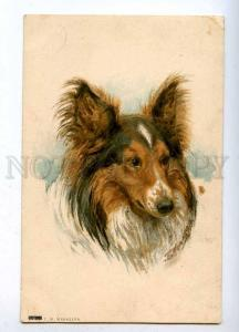 189175 RUSSIA Manizer collie dog vintage St.Eugenie #6081
