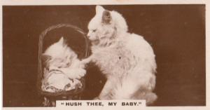 Hush My Baby Kitten In Cradle Old German Real Photo Cats Cigarette Card