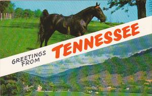 Greetings From Tennessee With Horse From Tanner's Stock Farm Near Franklin