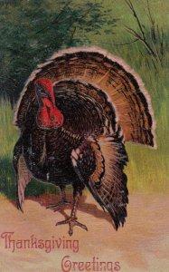 THANKSGIVING Greetings , Turkey , 00-10s ; PFB 7721