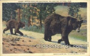 Yellowstone National Park, Bear Postcard Post Card Old Vintage Antique Bears ...