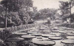 Lily Pond, Como Park, St. Paul, Minnesota, PU-1908