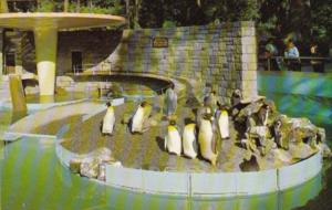 Canada Penguins Stanley Park Zoo Vancouver British Columbia