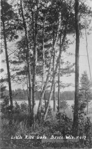 Bruce Wisconsin~Little Rice Lake Through Birch Trees~1926 Real Photo Postcard