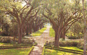 Louisaiana St Francisville Rosedown Plantation and Gardens Avenue Of Oaks