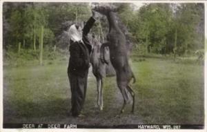 Wisconsin Hayward Feeding Deer At The Deer Farm Real Photo