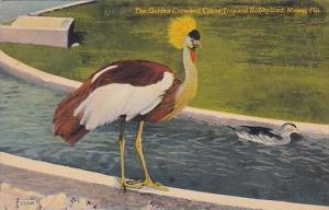 Florida Miami Golden Crowned Crane At Tropical Hobbyland 1948