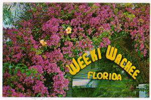 Weeki Wachee FL