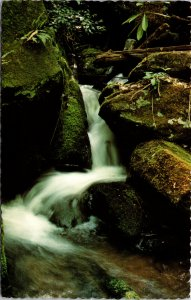 Sound of Falling Water Smokey Mountains National Park Postcard unused 1950s/60s