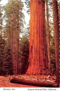 Mckinley Tree -