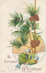 Best Wishes fo Christmas Greetings - Birds on Pine Tree Branches - pm 1923 - DB