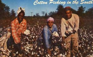 USA - Cotton Picking in the South