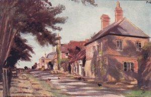 TUCK #6481, WINCHELSEA, England, 1900-10s; Fir Shadowed Road