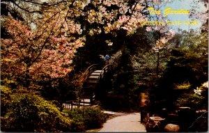 California, San Francisco - Japanese Tea Garden - Golden Gate Park - [CA-540]