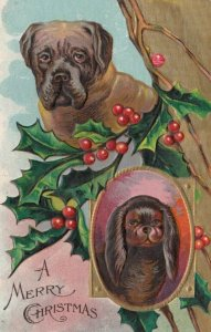 CHRISTMAS, 1900-10s; Portraits of dogs, Holly
