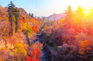 Georgia Postcard, Botanical Garden at Sunset in Tbilisi, Autumn, Trees M89