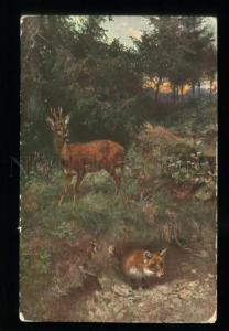 135773 Summer HUNT Deer FOX Vintage color TSN PC