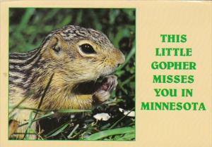 Minnesota Little Gopher