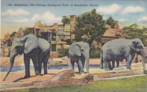 Elephants At Chicago Zoological Park Brookfield Illinois Curteich